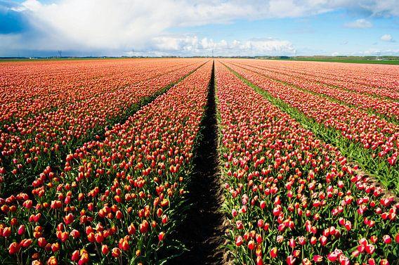 Alleen maar tulpen!! van Joris Pannemans - Loris Photography