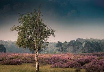Sommerliches violettes Heidekraut von Wim van D