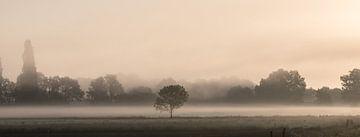 Boom in de mist bij Ravenstein van Wouter Bos