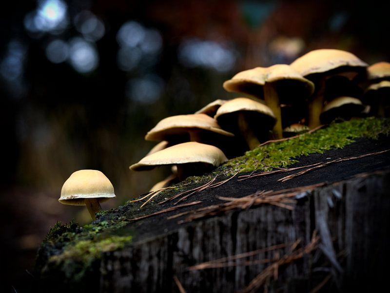 Paddenstoelen in het bos van Maikel Brands