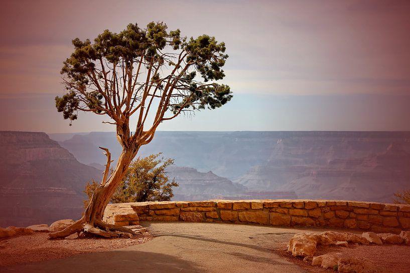Grand Canyon von fotoping