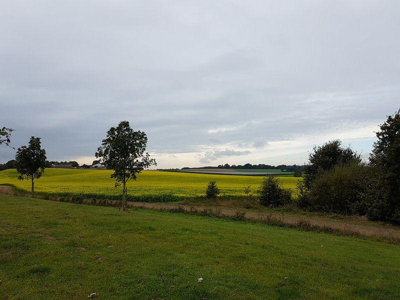 Gekleurde Heide