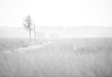 Heidelandschap von Jeroen Kleverwal