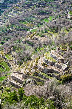 Groene terrassen, Hajar Gebergte, Oman van The Book of Wandering
