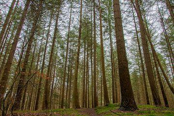 der Zwergenwald (Nunspeet) von thijmen hoekerd