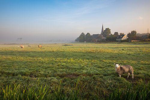 Hollands nevelig landschap met grazendeschapen en een typisch nederlandse wolkenlucht. Wout Kok One2 van