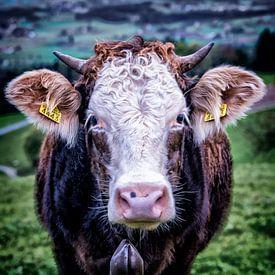 Een Zwitserse koe in de wei bij de berg Pfannenstiel bij Zürich. von Don Fonzarelli