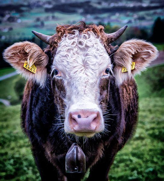 Een Zwitserse koe in de wei bij de berg Pfannenstiel bij Zürich. van Don Fonzarelli