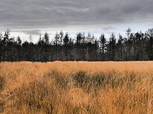 Herfstlandschap van Trees Rommelaere