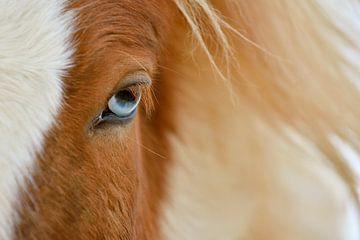 Blaue Augen von Loulou Beavers