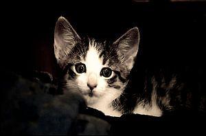 Neugieriges Katzenkind von Margitta Frischat