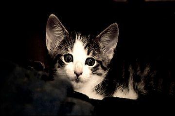 Neugieriges Katzenkind sur Margitta Frischat