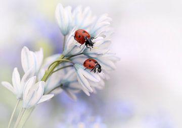 Lieveheersbeestjes, Ellen van Deelen van 1x