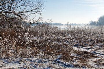 L'Elbe près de Magdebourg (Saxe-Anhalt) en hiver sur t.ART