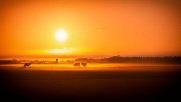Bei Sonnenaufgang grasen die Kühe im Tau von Studio de Waay
