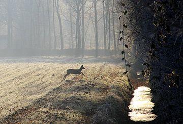 Hertje in de mistige morgen... van Silvia van Zutphen