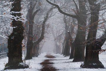 Winters pad van Joris Pannemans - Loris Photography