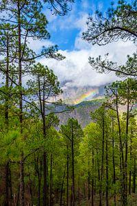 Landschap met een regenboog, bos, bergen en laaghangende wolken. van