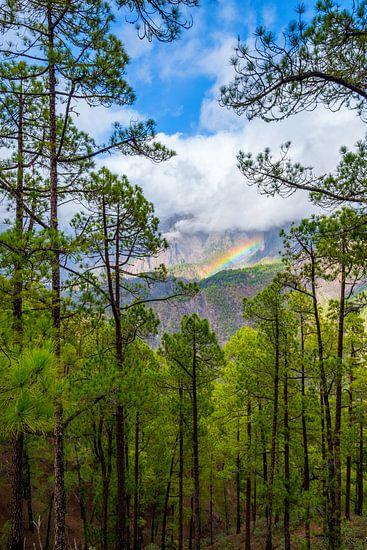 Landschap met een regenboog, bos, bergen en laaghangende wolken. van Lidewij Olive