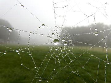 Spinneweb met dauwdruppels van Joke te Grotenhuis