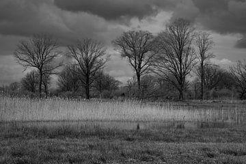 Bäume, Wolken und Schilf von Wytze Plantenga