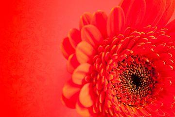 Rood! Gerbera von JPWFoto