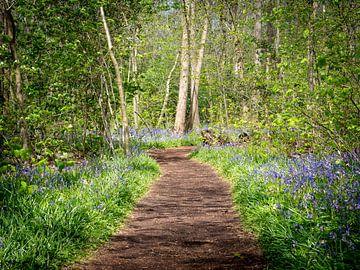 Wandelpad in een bos met wilde hyacinten van Karin Schijf