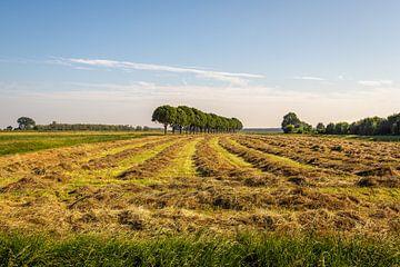 Trocknen von Gras in langen Graten von Ruud Morijn