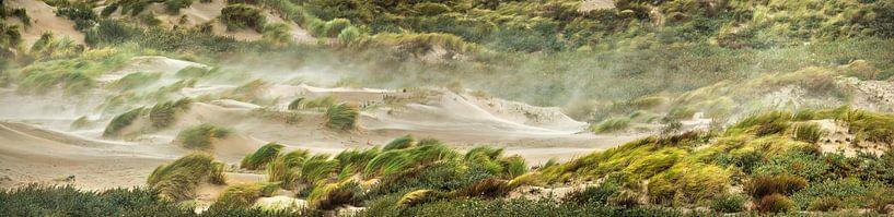 Sturmwind weht über das Strandhafergras von Frans Lemmens