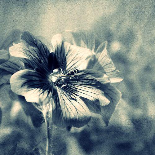 WILDFLOWERS - CROSS/PROCESS