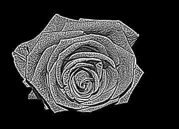 Rose von Jose Lok