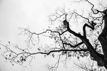 Schwarz-weiß fotografierter Baum | Dramatisch gegen den Himmel von Wendy Boon