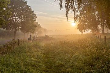 ein stimmungsvoller nebliger Morgen auf der Leiemeersen in Lauwe - Menen, Belgien.