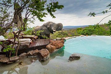 Olifant drink uit zwembad van Frans  de Best