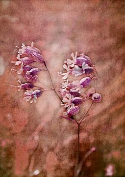 Wildblume van