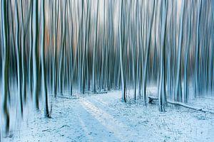 Winter bos. van Piet Haaksma