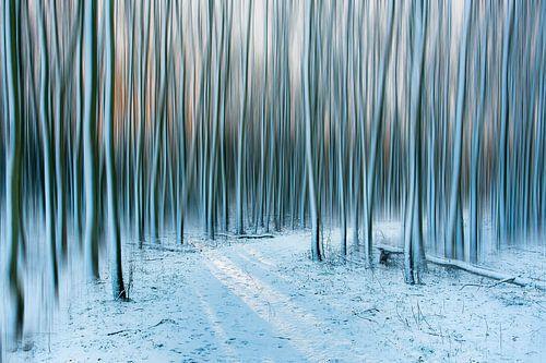 Winter bos.