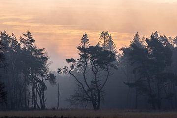 feeërieke bomen van Tania Perneel