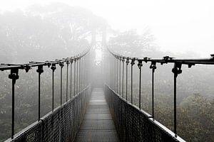 Hanging bridge, hangbrug in het nevelwoud van Costa Rica van Bianca ter Riet