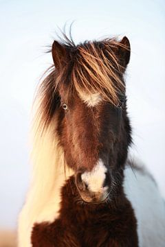 pony van Jana Behr