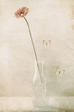 Miss daisy, Delphine Devos van 1x