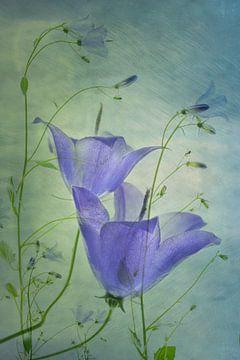 Blumen, Greetje van Son von 1x
