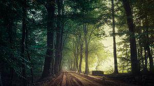 Quiet Path...