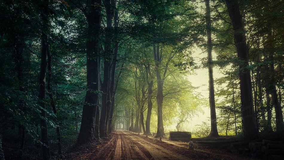 Quiet Path... van Remco Lefers