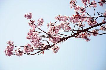 Rosa Blütenniederlassung am sonnigen Tag von Evelien Doosje
