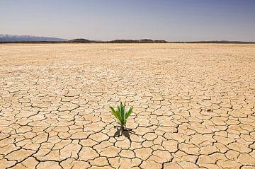 SA11327333 Plante verte dans un paysage aride sur BeeldigBeeld Food & Lifestyle