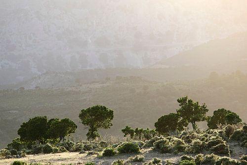 Sardinian Valley II van