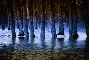 Blauwe waterbos