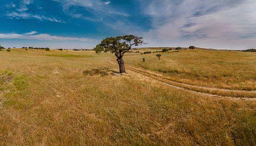 Eenzame boom in een golvend landschap, Castro Verde, Alentejo, Portuga van