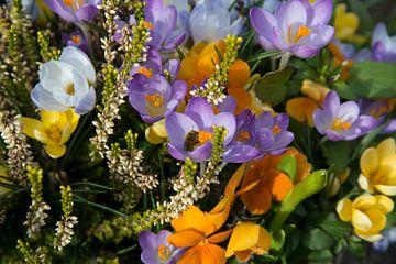 Bloemenzee von CreaBrig Fotografie